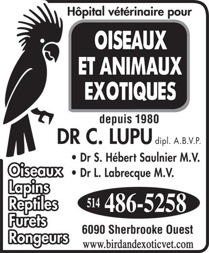 Veterinarian Hospital for Birds & Exotics (514-486-5258) - Display Ad - dipl. A.B.V.P. Dr S. Hébert Saulnier M.V. Oiseaux Dr L. Labrecque M.V. Lapins Reptiles Furets 6090 Sherbrooke Ouest Rongeurs www.birdandexoticvet.com depuis 1980