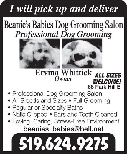 Beanies Babies Dog Grooming (519-624-9275) - Annonce illustrée======= - I will pick up and deliver Beanie s Babies Dog Grooming Salon Professional Dog Grooming Ervina Whittick ALL SIZES Owner WELCOME! 66 Park Hill E Professional Dog Grooming Salon All Breeds and Sizes   Full Grooming Regular or Specialty Baths Nails Clipped   Ears and Teeth Cleaned Loving, Caring, Stress-Free Environment 519.624.9275