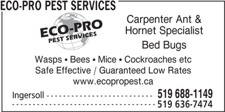 Image Result For Orkin Prices For Bed Bugs