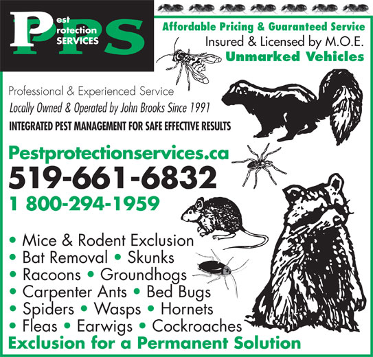 AAA Pest Protection Services (519-661-6832) - Display Ad - Affordable Pricing & Guaranteed Service Insured & Licensed by M.O.E. Unmarked Vehicles Professional & Experienced Service Locally Owned & Operated by John Brooks Since 1991 INTEGRATED PEST MANAGEMENT FOR SAFE EFFECTIVE RESULTS Pestprotectionservices.ca 519-661-6832 1 800-294-1959 Mice & Rodent Exclusion Bat Removal   Skunks Carpenter Ants   Bed Bugs Spiders   Wasps   Hornets Fleas   Earwigs   Cockroaches Exclusion for a Permanent Solution Racoons   Groundhogs