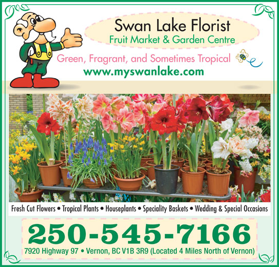 Swan Lake Florist (250-545-7166) - Display Ad - Green, Fragrant, and Sometimes Tropical www.myswanlake.com Fresh Cut Flowers   Tropical Plants   Houseplants   Speciality Baskets   Wedding & Special Occasions 250-545-7166 7920 Highway 97   Vernon, BC V1B 3R9 (Located 4 Miles North of Vernon)