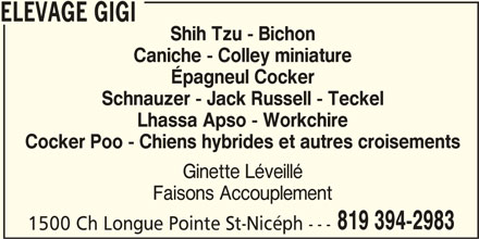 Elevage Gigi (819-394-2983) - Annonce illustrée======= - Schnauzer - Jack Russell - Teckel Lhassa Apso - Workchire Cocker Poo - Chiens hybrides et autres croisements Ginette Léveillé Faisons Accouplement 819 394-2983 1500 Ch Longue Pointe St-Nicéph --- ELEVAGE GIGI Shih Tzu - Bichon Caniche - Colley miniature Épagneul Cocker