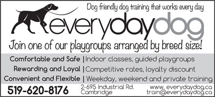 Everyday Dog (519-620-8176) - Display Ad