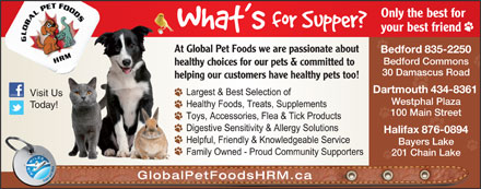 Global Pet Foods (902-702-0025) - Annonce illustr&eacute;e - Only the best for your best friend At Global Pet Foods we are passionate about Bedford 835-2250 Bedford Commons healthy choices for our pets &amp; committed to 30 Damascus Road helping our customers have healthy pets too! Dartmouth 434-8361 201 Chain Lake GlobalPetFoodsHRM.ca Bayers Lake Visit Us Westphal Plaza Today! 100 Main Street Halifax 876-0894